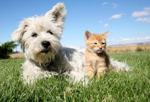 small animal veterinarian in sutherlin, OR